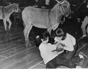 Donkey Basketball Game