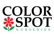 colorspot logo