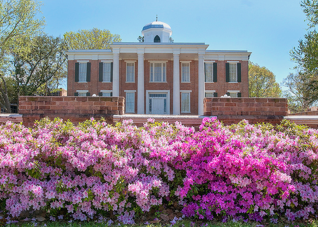 Beautiful bush full of flowers with the prestigious Austin Hall in the distance.