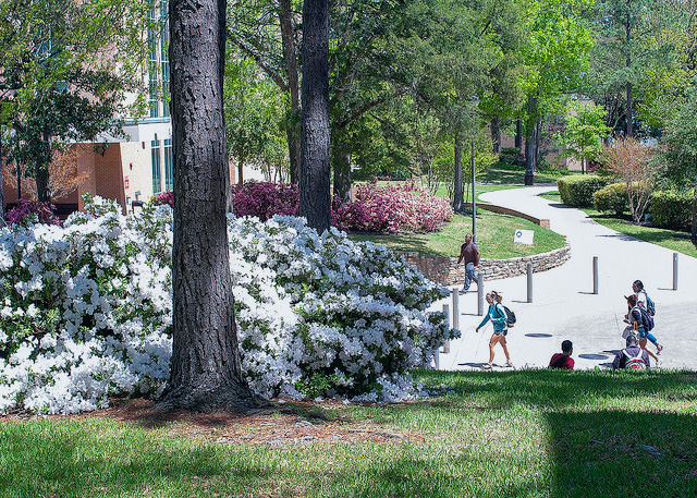 Picture of students walking the calm paths of campus.