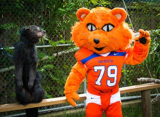Sammy Bearkat with a real life bear cat.
