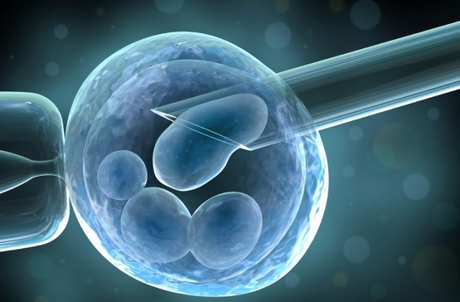 DAP - Stem Cell