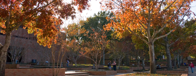 Fall trees on the SHSU campus.