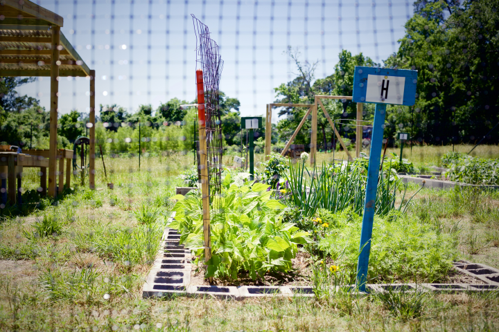 A view of the Bearkat Community Gardens from out side the deer proof fence.