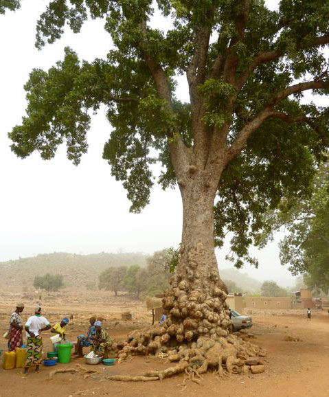 People sit under a tree outside a down in Burkina Faso