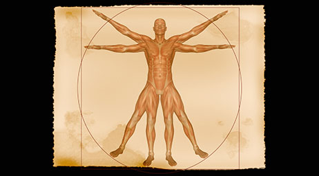 Physiology, such as this anatomical diagram, is one of the many subjects you will study in this program.